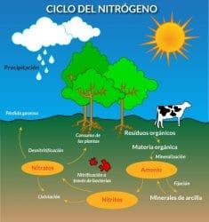 Usos del Nitrógeno