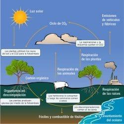 ciclos del carbono